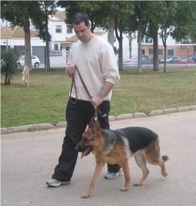 Cliente con su pastor alemán