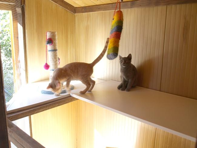gatos22