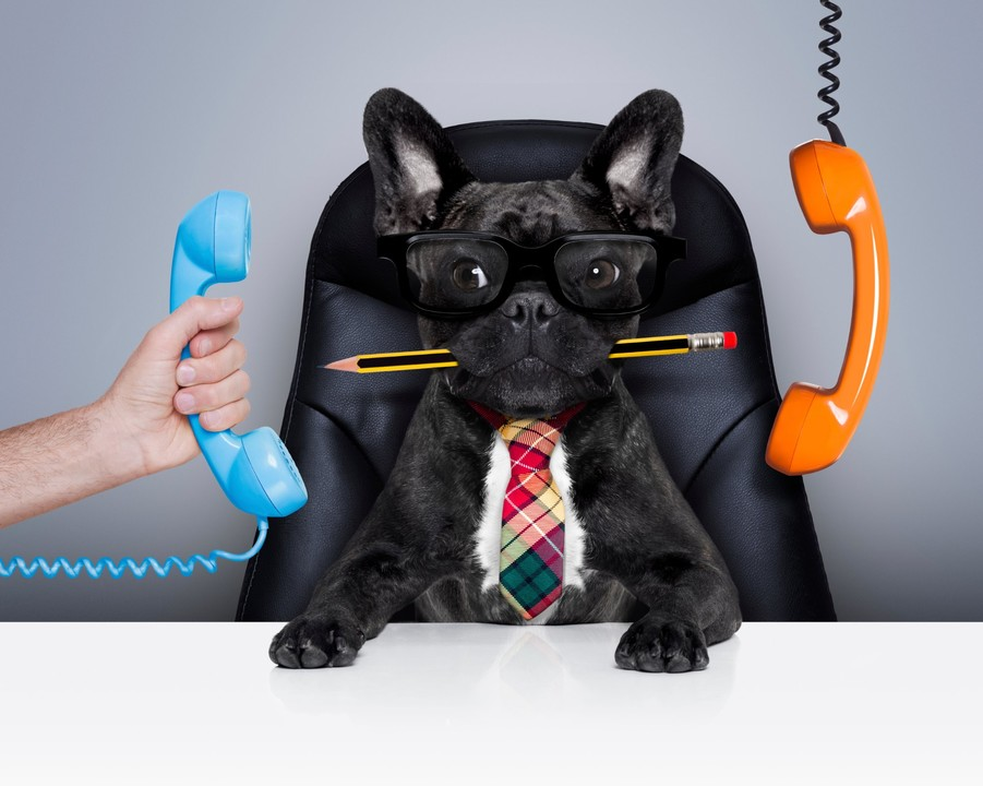 gestionar estrés canino perro