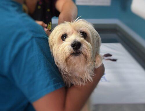 ¿Por qué es importante vacunar a tus mascotas?