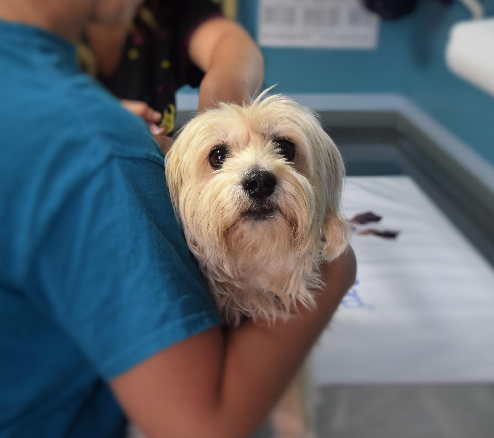 La vacunación es fundamental para mantener sana a tu mascota