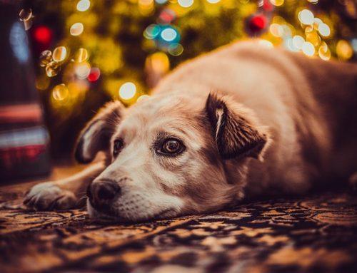 La comida navideña puede ser peligrosa para tu perro