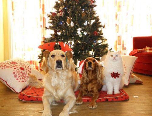 La navidad con mascotas es una verdadera navidad
