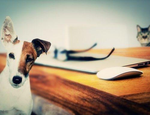 ¿Cómo realizamos el desconfinamiento con mascotas?