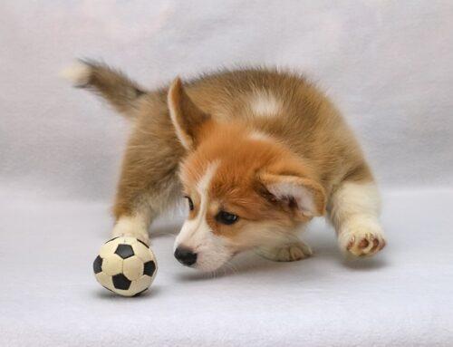 4 cosas divertidas que hacen los perros