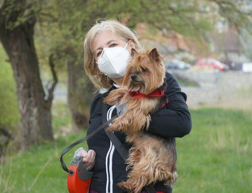 Los perros ¿detectan el coronavirus?