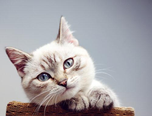 La desparasitación de los gatos